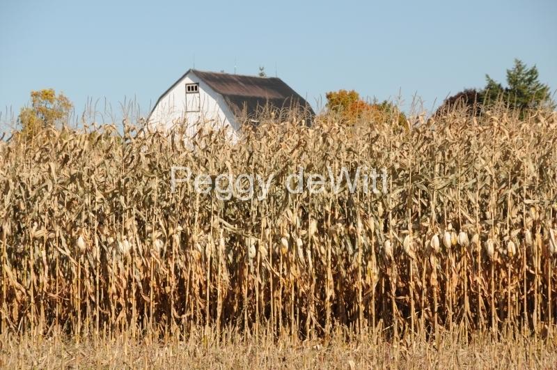 Field Corn Barn #2513