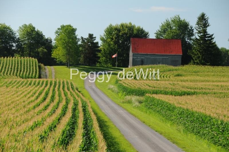 Field Corn Barn #2815