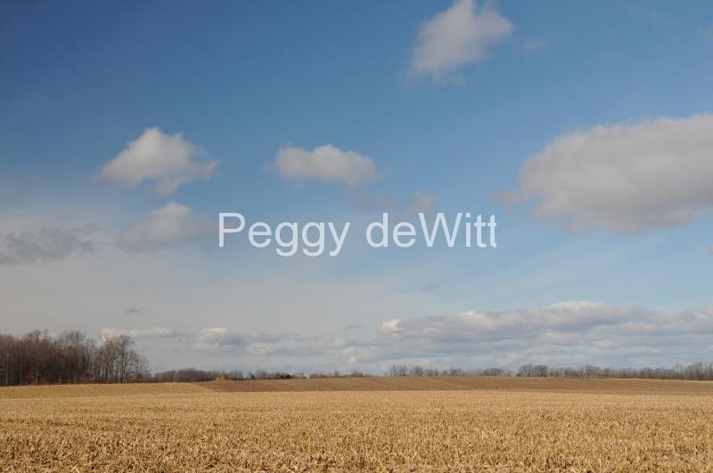Field Corn Harvested #1720