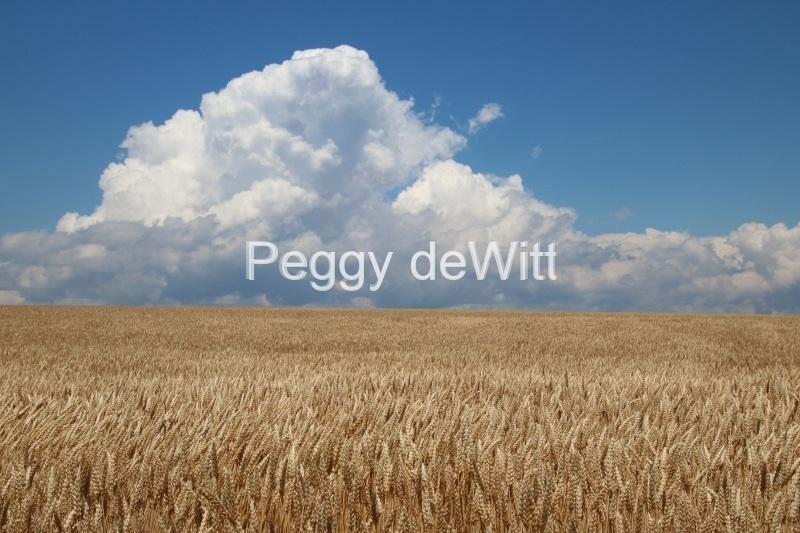 Field Grain Clouds #3199