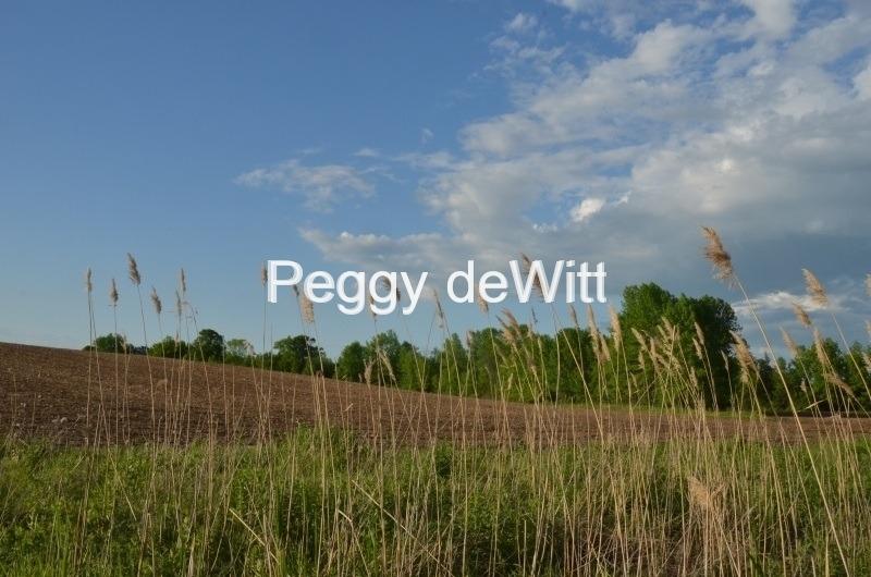 Field Grass Foreground #2999