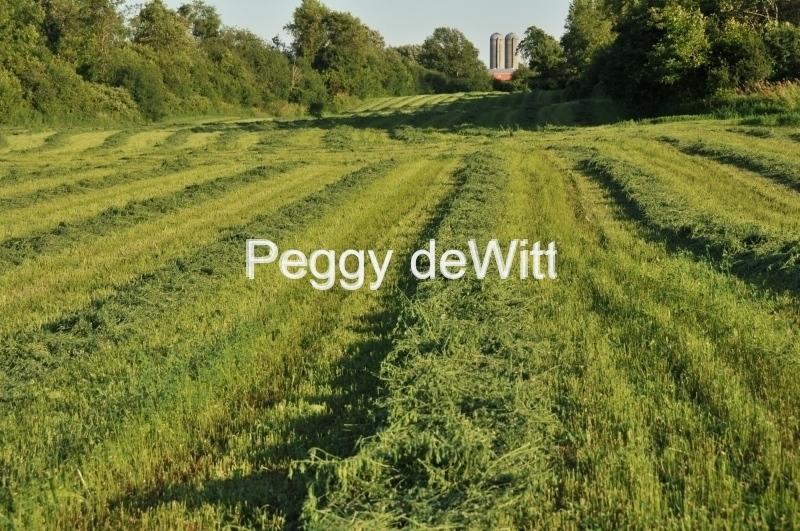 Field Hay Rows #3007