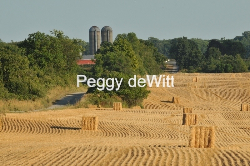 Field Straw Bales Square #3027