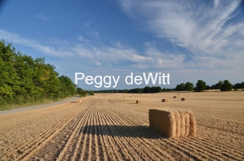 Field Straw Bales Square Sky #3029
