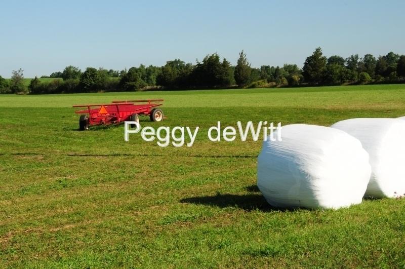 Field Wagon Bales #2517