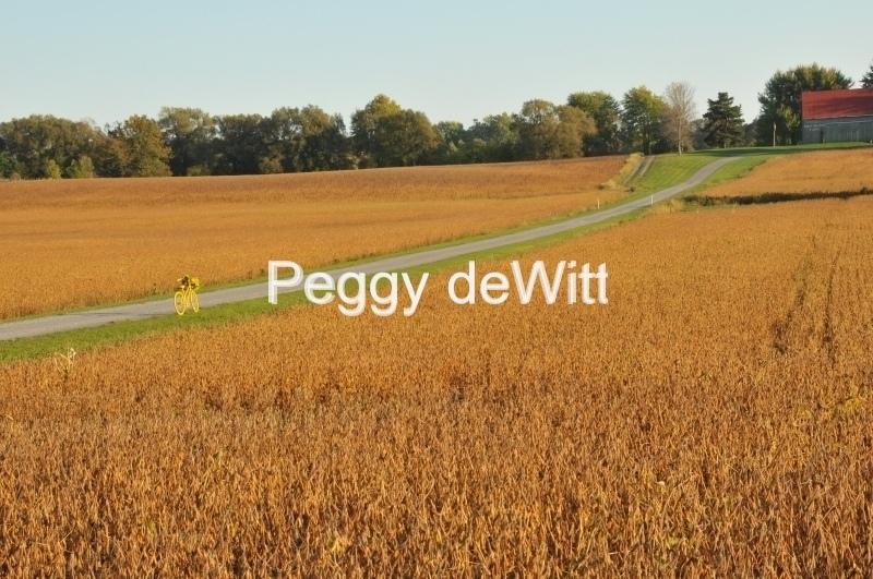 Field Yellow Bike #3041