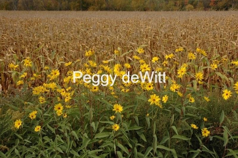 Field Yellow Flowers 2 #1148