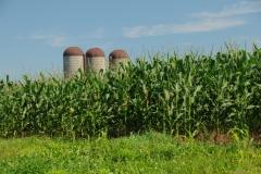 Corn Field Silos #1698
