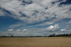 Field Barley Sky #1532