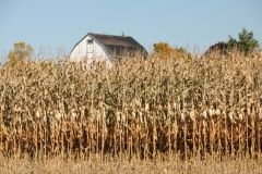 Field Corn Barn #2513