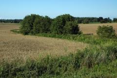 Field Grain #743