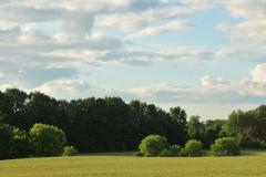 Field Grain Cherry Valley #2997