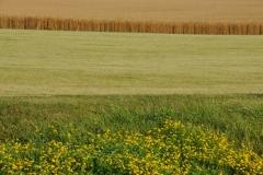 Field Grain Hay #2847