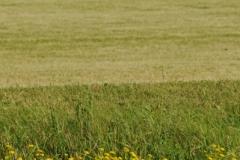 Field Grain(v) #2848