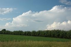 Field Green #1534
