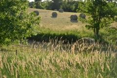 Field Hay Bales #3011