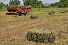 Field Hay Bales Brenda #3005