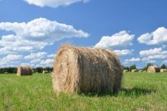 Field Hay Bales Round #3006