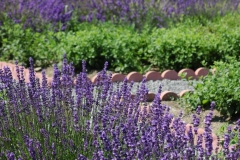 Field Lavendar Bricks #3009