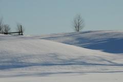 Field Snow Winter #2378