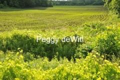 Field Spring #3026
