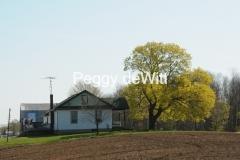 Field Spring Tree #2608