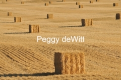 Field Straw Bales Plain #3028