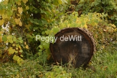Log #1869