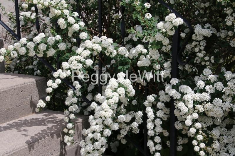 Flowers White Steps #3247