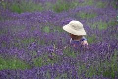 Field Lavender Hat #3557
