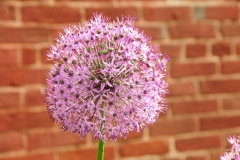 Flower Chives Brick #2532 2