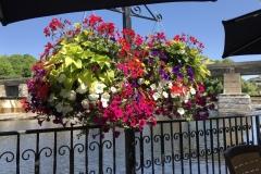 Flowers-Hanging-Basket-3712