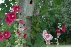 Flowers Hollyhock Birdhouse (v) #2163