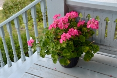Flowers Porch #3567