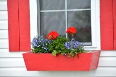 Flowers Red Window Box #3236