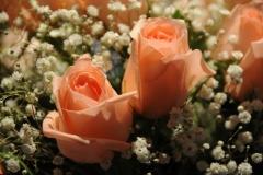 Flowers Roses #2385