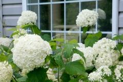 Flowers White Sal #3569