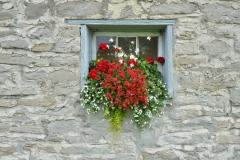 Flowers Window Box Cider Co #3248