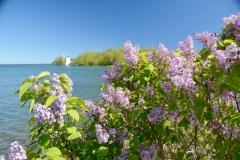 Lilacs Pt Traverse #3585