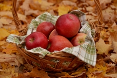 Apples Basket Fall Closeup #3059