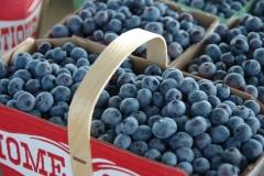 Food Blueberries Waupoos #2537