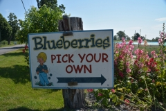 Food Blueberry Sign #3148