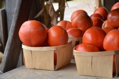 Food Vegetable Stand Tomatoes #3252