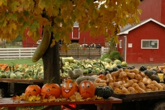 Vegetable Stand Picton #711 a