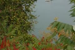 Glenora Ferry Fall (v) #1245