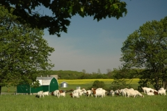Goats Farm #1108