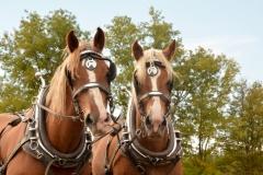 Horses Larry #3268