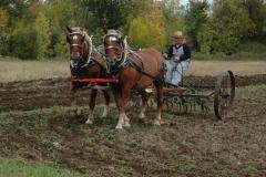 Horses Pulling #1105