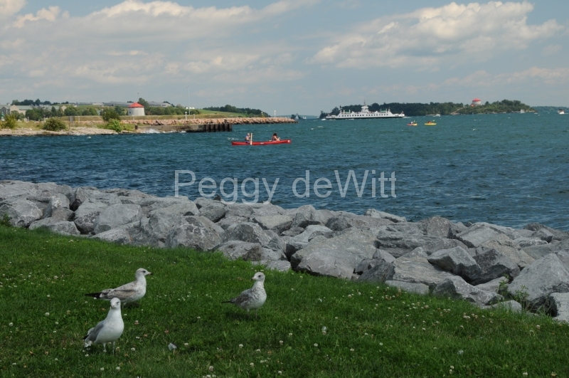 Kingston Shore Seagulls #1862