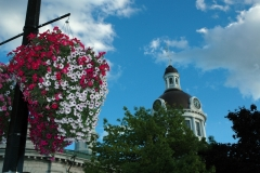 Kingston City Hall Flowers #1422